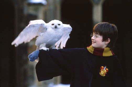 הארי והדוויג